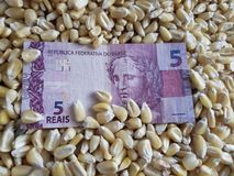 Brazil, maize producing country, dry corn grains and brazilian banknote of five reais. Yellow edible seed, agriculture and harvest, world cereal production royalty free stock photography