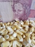Brazil, maize producing country, dry corn grains and brazilian banknote of five reais. Yellow edible seed, agriculture and harvest, world cereal production stock photography
