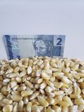 Brazil, maize producing country, dry corn grains and brazilian banknote of two reais. Yellow edible seed, agriculture and harvest, world cereal production stock photo