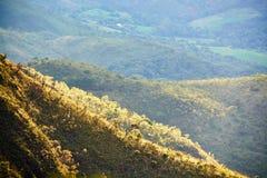 Brazil Minas Gerais montains. Trees farm Stock Images