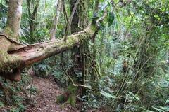 Brazil national park Stock Photography