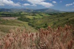 brazil nationalpark Arkivbild