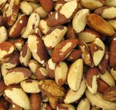 Brazil nut Royalty Free Stock Photography