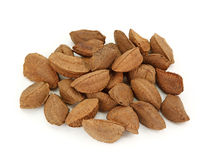 Brazil nut. Isolated on white background Stock Photos