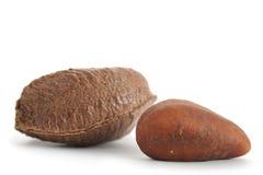 Brazil Nut stock image
