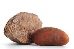 Brazil Nut. Close-up image of Brazil nut studio isolated on white background Royalty Free Stock Photo