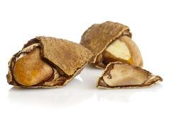 Brazil nut Stock Photo