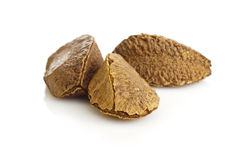 Brazil nut Royalty Free Stock Photos