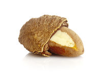 Brazil nut Stock Photo