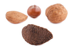 Brazil Nut Royalty Free Stock Images