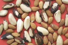Brazil nut and almond Stock Photo