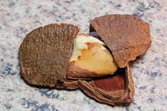 Brazil nut (Bertholletia excelsa) Royalty Free Stock Image