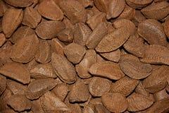 Brazil nut Royalty Free Stock Photography