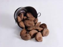 Brazil Nut Escape Royalty Free Stock Image