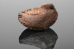 Brazil Nut isolated on black background. With reflection and cop Stock Image