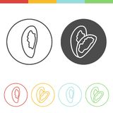 Brazil nut vector icons. Vector set of Brazil nut icons in thin line style Stock Images