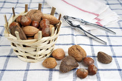 Brazil nut, walnuts, almonds and hazelnuts Royalty Free Stock Photo
