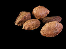 Brazil Nuts #1 Stock Images