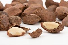Brazil nuts Stock Photo