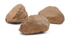 Brazil nuts Stock Photography
