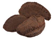 Brazil nuts Stock Photos