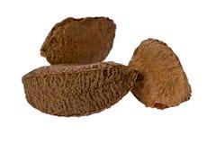 Brazil Nuts (Bertholletia excelsa) Stock Images