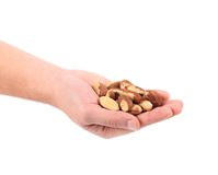 Brazil Nuts in hand. Royalty Free Stock Photos
