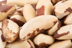 Brazil nuts macro Stock Photography