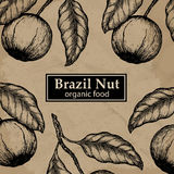 Brazil nuts tree design template. Vintage floral background. Stock Image