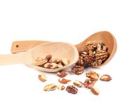 Brazil nuts and walnuts in a wooden spoon. Stock Image