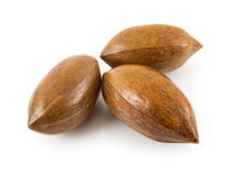 Brazil nuts Stock Image