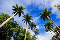 brazil palmtrees Royaltyfri Bild