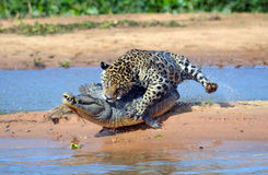 Brazil Pantanal Royalty Free Stock Photos