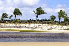 Brazil, Pititinga, Beach with palms Stock Photography