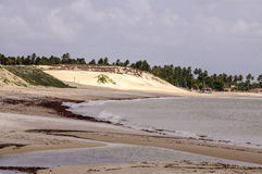 Brazil, Pititinga, sand dune Royalty Free Stock Image