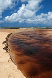 Brazil Praia da Forte Eco-reserve estuary Stock Photos