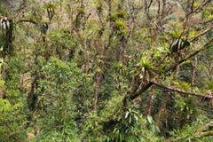 Brazil rainforest Stock Image