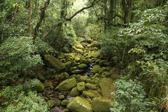 Brazil rainforest Stock Photography