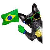 Brazil soccer dog. With flag  beside a white blank banner or placard Stock Photography