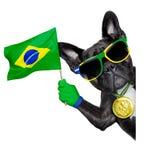 Brazil soccer dog Stock Photography