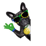 Brazil soccer dog. With ok fingers  beside a white blank  banner or placard Royalty Free Stock Photography