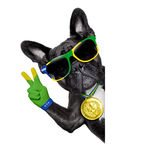 Brazil soccer dog. With peace fingers  beside a white blank  banner or placard Royalty Free Stock Images