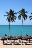 Brazil tropical palm lined beach. Brazil Alagoas State Maceio deserted exotic tropical palm lined beach with turquoise ocean Stock Image