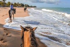 Brazilië - Horseback die op de stranden in Bahia berijden stock afbeelding