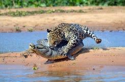 Brazilië Pantanal Royalty-vrije Stock Foto's