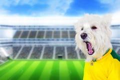 Braziliaans het westenhond het gillen doel Stock Foto