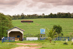 Braziliaans Landbouwbedrijf Stock Fotografie