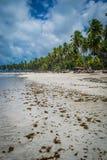 Braziliaans strand-Strand van Carneiros, Pernambuco Stock Foto