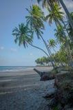 Braziliaans strand-Strand van Carneiros, Pernambuco Stock Fotografie