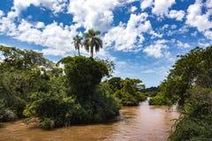 Braziliaans tropisch landschap Stock Afbeeldingen